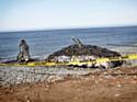 Une baleine de déchets pour protester