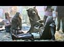 Canal+ fait sa pub avec un ours