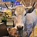 Les marques investissent le salon de l'agriculture