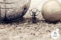 Obut affiche ses boules