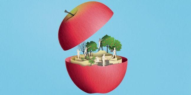 Pink Lady : la pomme connectée