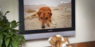 DOGTV : une nouvelle chaîne de niche arrive sur les écrans
