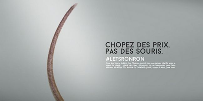 Les Chatons d'Or 2015 sont ...